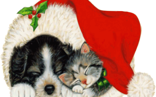 Christmas pup and kitten under Santa hat.